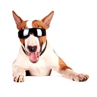 -Cheerful-Bull-Terrier