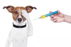 vaccines-500x333